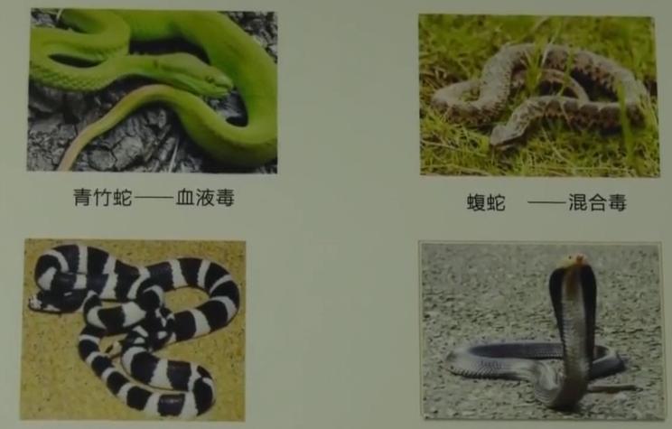 惠州:男子徒手抓眼镜蛇被咬