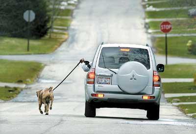 广西柳州:女子街头神操作 开车来遛狗