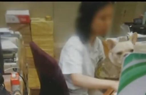 广州:医院收费员抱狗上班 记者实地查访