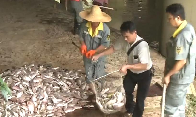 [HD][2019-08-05]今日关注:广州:黄埔乌涌现大量死鱼 职能部门介入