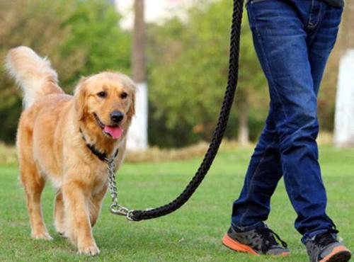 """今日最争议:广州规定养犬""""限高""""71厘米,你怎么看?"""