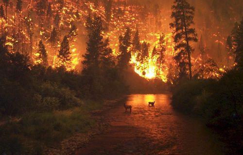 亚马孙森林大火:持续燃烧16天 过火面积近50万公顷