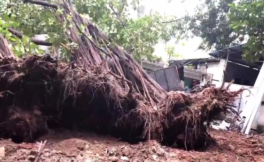广州:窗外传进巨大异响声 探头看大树倾倒