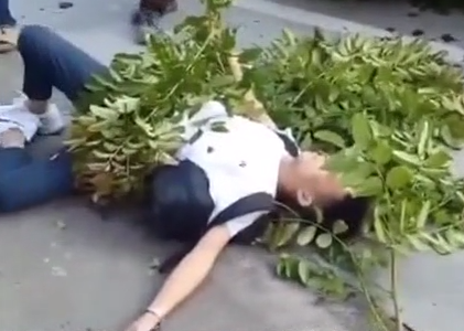 (DV现场)珠海:大树突然倒塌 砸中经过路人