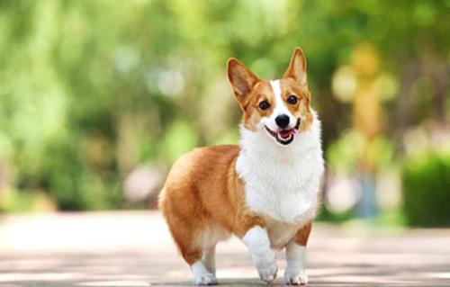 """广州启动修订养犬管理条例:养犬管理或""""加码"""" 多次违法直接重罚"""