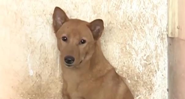 肇庆端州区:屠宰场里发现自家丢失的宠物狗