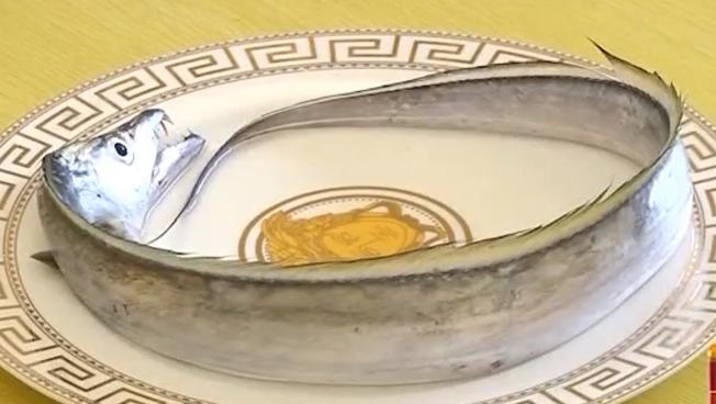 制作清蒸带鱼