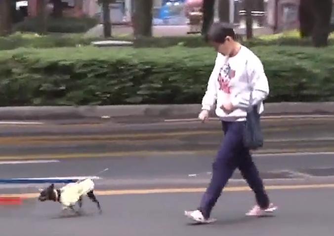 [HD][2019-10-12]今日一线:广州养犬条例修订草案 犬只不牵绳伤人 或没收犬只并罚一万元