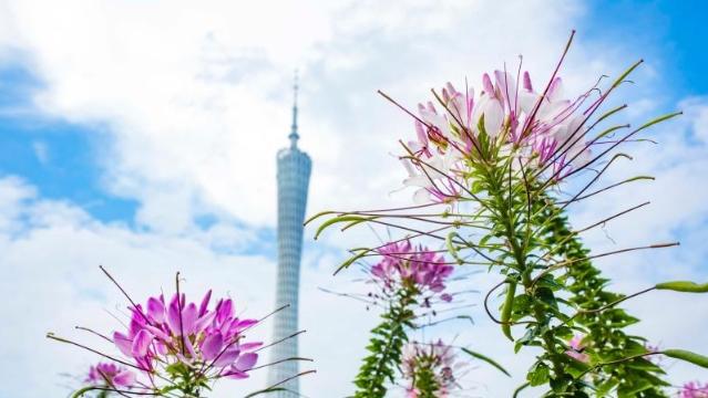 空气质量:广州前11个月 PM2.5同比下降13.9%