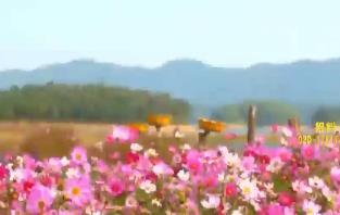 """大美广东 冬日秋色:台山 湖泊草甸百岛环绕 和草原""""约会"""""""
