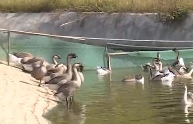 [2020-01-18]全民帮帮忙:鹅场排污引公愤 上百村民要说法