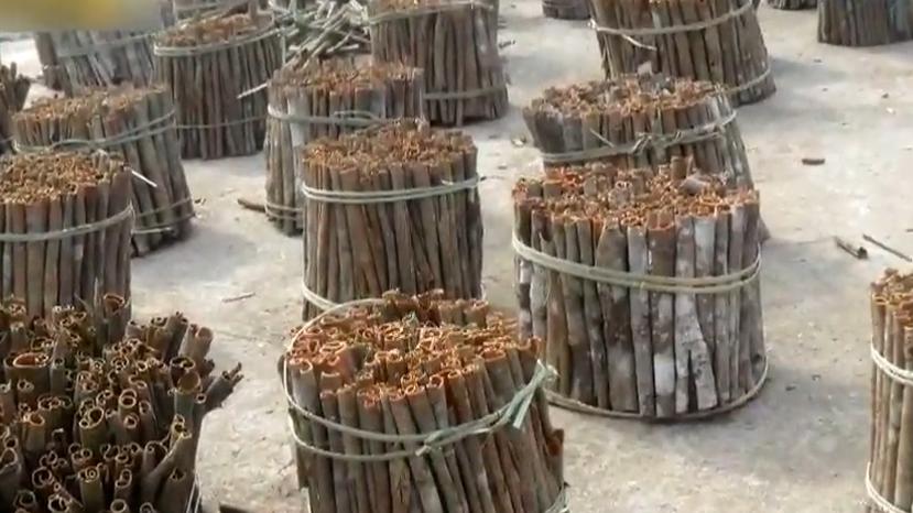 [HD][2020-05-11]今日關注:羅定:肉桂價格翻倍 多村桂樹遭砍伐