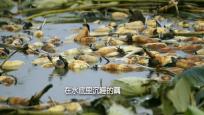 绕平钱东镇藕田