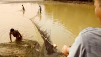 英德沙口江溪村—渔获