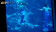 环球人文杂志-现实世界的美人鱼