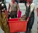汕尾陆丰:网传渔民捕获400斤石斑?事发地实为海南