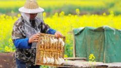 养蜂带动村民致富路