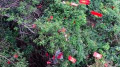清远:景区现红包雨 引游客爬上峭壁争抢