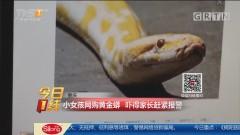 重庆:小女孩网购黄金蟒 吓得家长赶紧报警