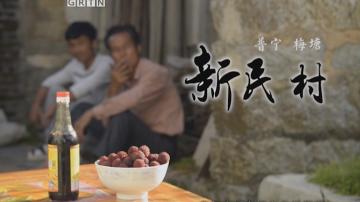 普宁梅塘镇新民村——杨梅