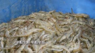 饶平钱东镇上浮山—虾场