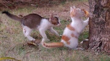 小猫爬树无能 猫爸上阵亲自教学