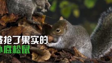 卧底摄像机带你探索神奇的动物世界