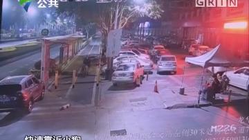 深圳:偷狗贩狗连贯作案 警方一举抓获