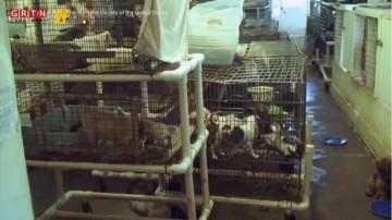 美国动物庇护所(下)