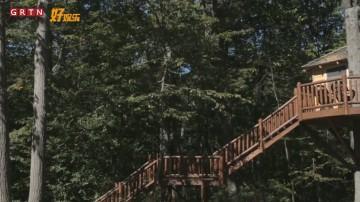 环球人文杂志-建在树上的美国梦