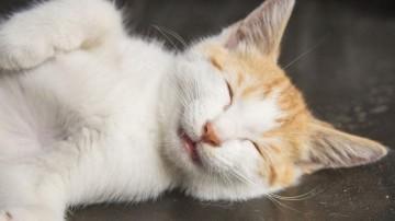 猫跟你一起睡觉的原因一:为了温暖