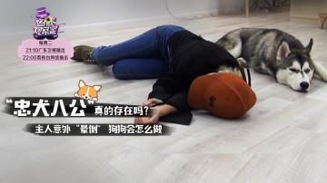[HD][2018-09-04]幽默观察之狗狗应急反应