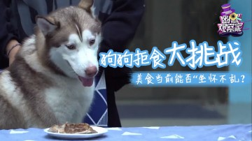 [HD][2018-10-30]幽默观察之狗狗拒食大挑战