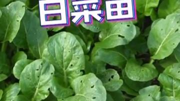 白菜苗肉丝汤