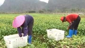 [2020-03-17]南方小记者:南方小记者变身配送员 驰援滞销农户送菜到社区