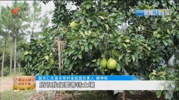 """韶关仁化:蜜柚筑起""""甜蜜""""致富路"""