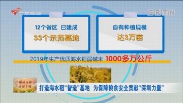 """打造海水稻""""智造""""基地 为保障粮食安全贡献""""深圳力量"""""""