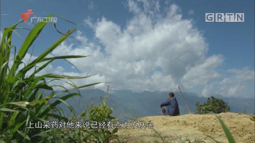 小白薇  秘境神草第二季第三集