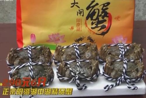 正宗阳澄湖中湖精品蟹