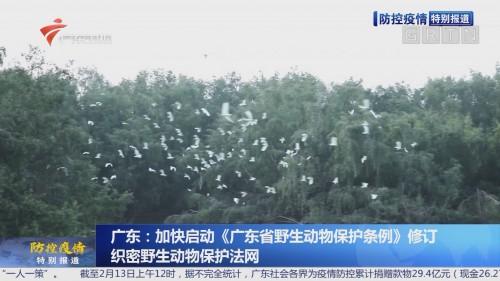 广东:加快启动《广东省野生动物保护条例》修订 织密野生动物保护法网