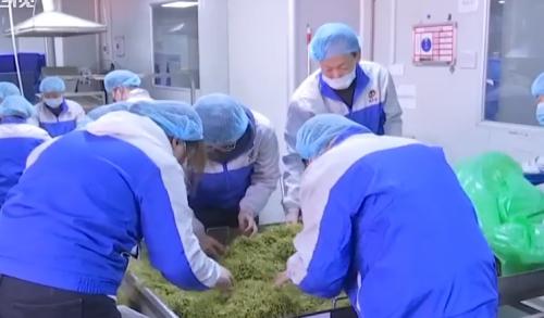 防控疫情最前线:广东多家医药企业提前开工 生产应急物资驰援全国各地