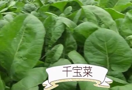 制作花肉欖菜炒千寶菜