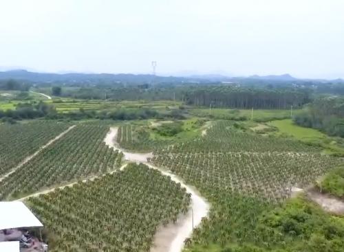 """[HD][2020-04-26]廣東視窗:陽江江城:著力做好""""農業強 農村美 農民富""""三篇文章"""