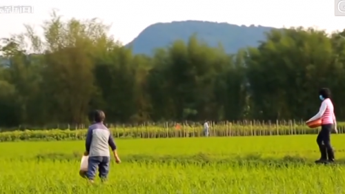 "[HD][2020-05-05]社会纵横:陈燕红 带领农户""抱团""发展 助推精准扶贫"