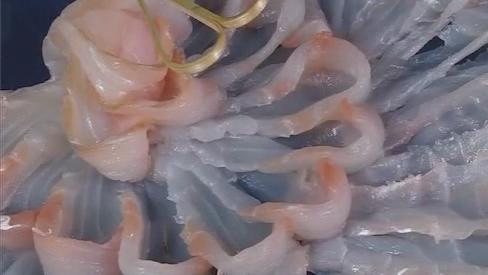 鲂鮄鱼刺身