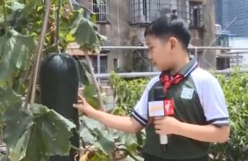 [2020-06-18]南方小记者:天台上的种植园——回民小学劳动教育成果展示