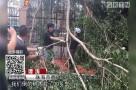 珠海市香洲区:大家齐努力 校园灾后工作整理完毕