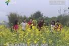 清远:280亩油菜花盛开 引各路游客拍照留念