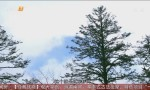 四川——红豆杉
