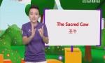 [2017-07-19]小桂英语:圣牛